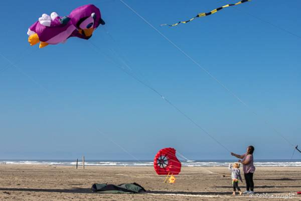 kids and adult flying kites in Long Beach Wa