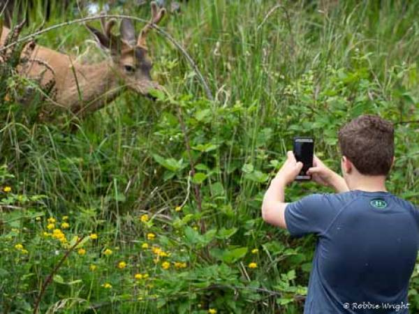Boy photographing a deer at close range