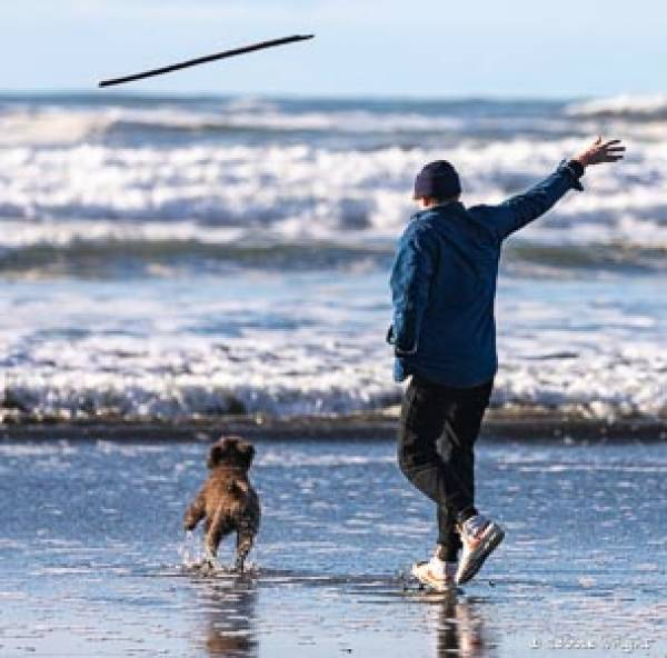 Boy throwing stick into the surf for a labradoodle