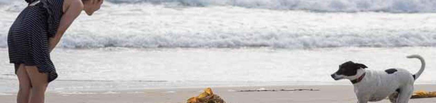 Woman with a dog on the beach in Long Beach, Washington